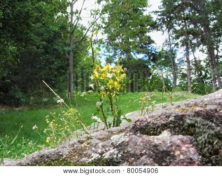Flowers Between The Rocks