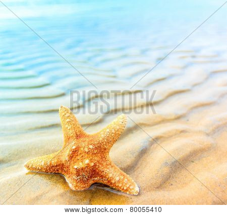 Star Sea Shell