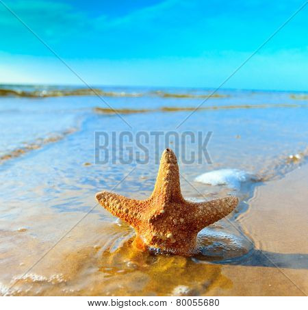 Star Fish Shell