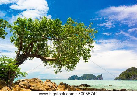 Green Getaway Branches Overhanging