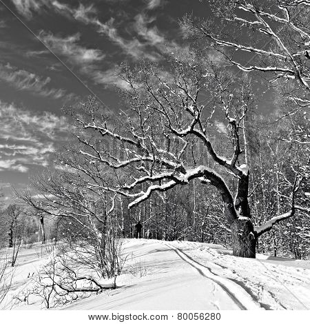 Winter Park in black and white