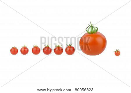 Tomato covey.