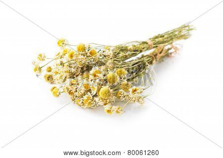 Dried camomile twig isolated