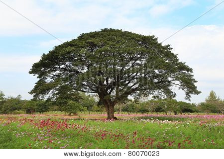 The Big Rain Tree