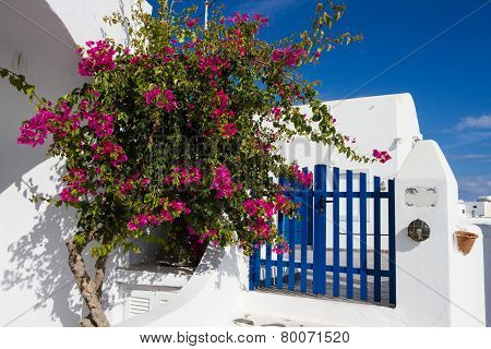 Bougainvillea And Blue Fence
