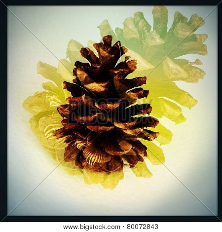 An Instagram filtered image of a pine cone - double exposure