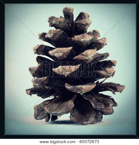 An Instagram filtered image of a pine cone