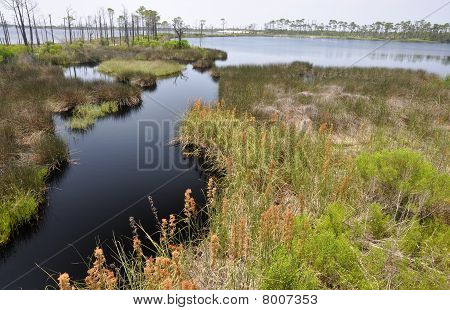 Bon Secour National Wildlife Refuge