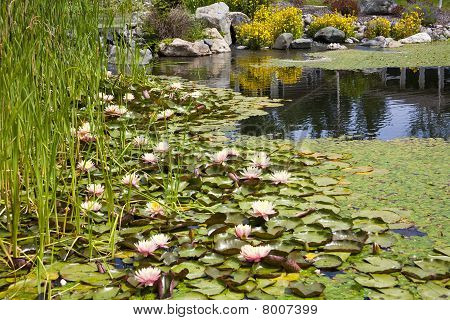 Backyard Pond Water Feature