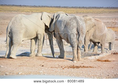 Elephant covered in white mud