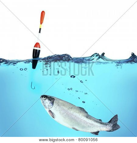 Fishing a trout, isolated on white
