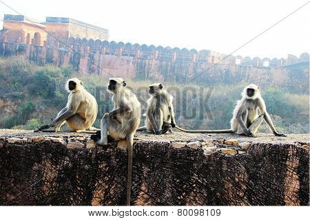 Monkeys On The Wall