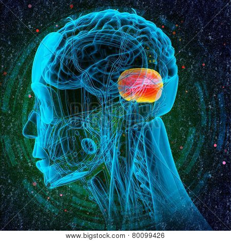 3D Render Medical Illustration Of The Human Brain Cerebrum