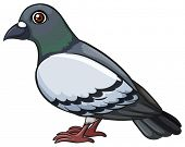 picture of webbed feet white  - A pigeon on a white background - JPG