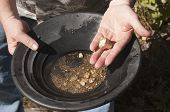 picture of gold nugget  - gold panning man striking it rich by finding the mother lode or at least a nugget or two - JPG
