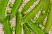 pic of bean-pod  - Open peas pods with beans on a burlap - JPG