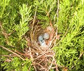 stock photo of safe haven  - Tiny collection of bird - JPG