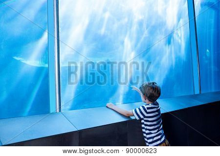 Young man pointing a shark with his finger at the aquarium