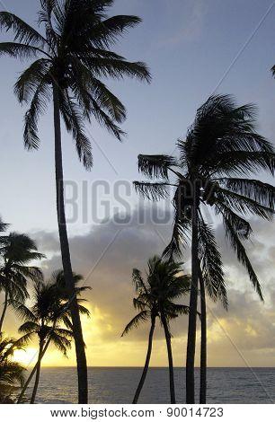 The Coast Of  Le Diamant In Martinique
