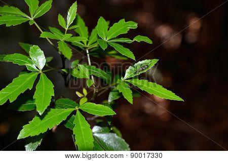 Resting On Leaf