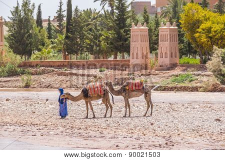 AIT BENHADDOU, MOROCCO, APRIL 10, 2015: Local man in blue clothes walks with his camels by the bed of river near one of the most extraordinary Kasbahs in Morocco