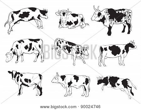 vector icons of cows