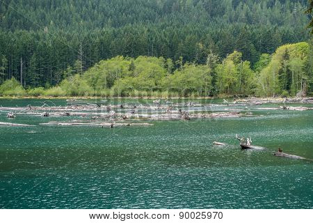 Lake Cushman Logs
