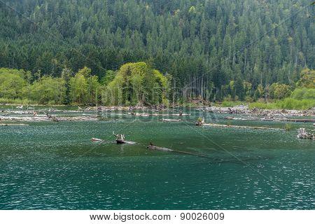 Lake Cushman Logs 2