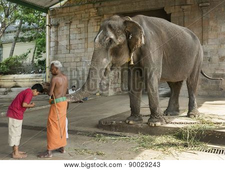 Elephant Blessing At The Mahalingeswarar Temple.