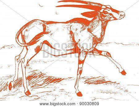 Antelope orange