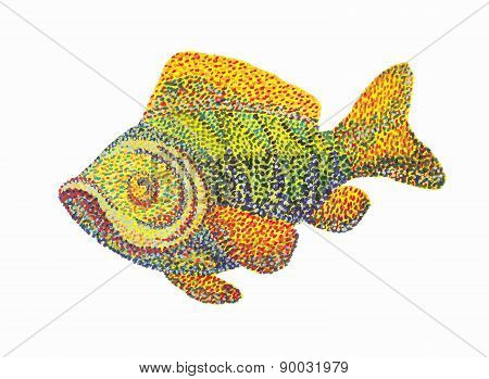 Fish on white background.