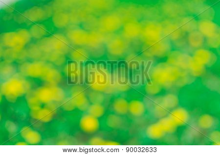 Green yellow background