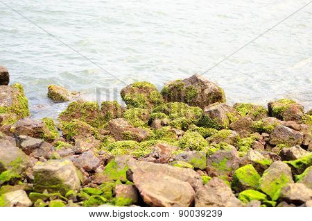 Stones And Green Seaweed On The Coast Line
