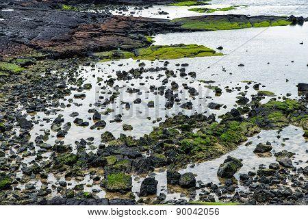 Basaltic Shore In Jeju
