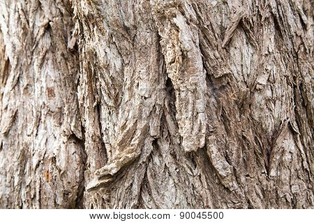 Old Growth Tree Bark Texture