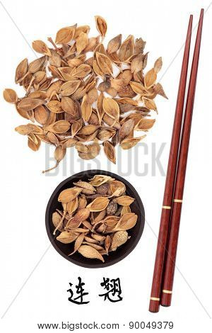 Forsythia fruit chinese herbal medicine with chopsticks and mandarin script title translation. Lian qiao.