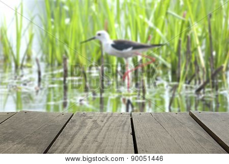 Defocus And Blur Image Of Terrace Wood And Black-winged Stilt Se