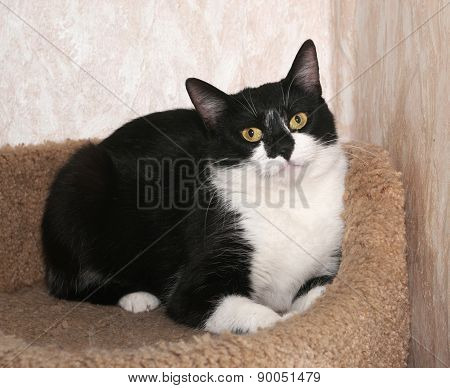 Black And White Cat Lies On Scratching Posts