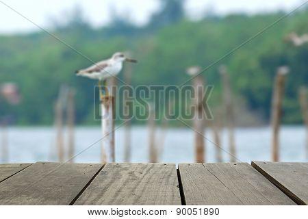 Defocused And Blur Image Of Terrace Wood And Beautiful Rare Bird