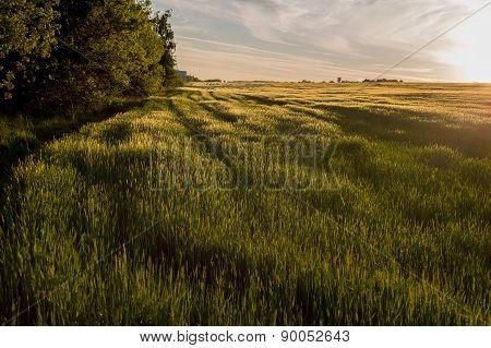 Lush Meadows Illuminated By The Sun