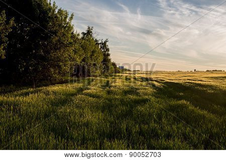 Meadows And Forest, Nature Landscape