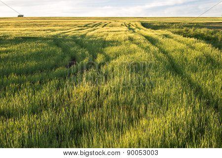 Sunny Spring Meadows