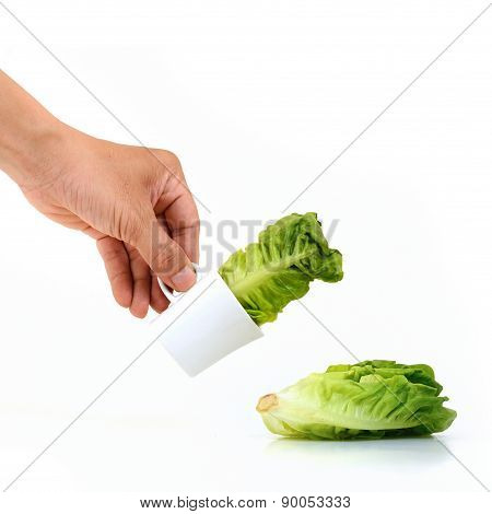 Baby Cos Lettuce In Beautiful Cup Pouring On White Background