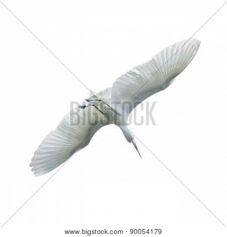 Egret Beautiful White Bird Flying In The Sky Isolated On White B