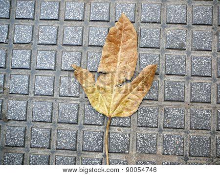 Autumn Leaf On Pavement
