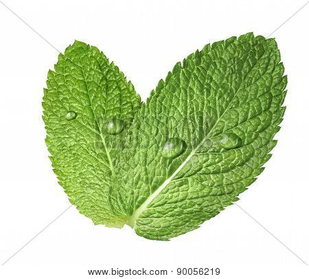 Mint Herb Leaves Water Drops 2 Isolated On White Background