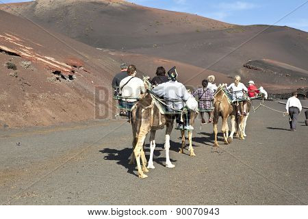 Tourists Riding On Camels Being Guided By Local People Through The Famous Timanfaya National Park