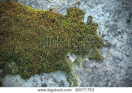 Mossy Cement Texture Background