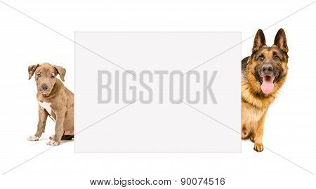 Two dogs peeking from behind banner