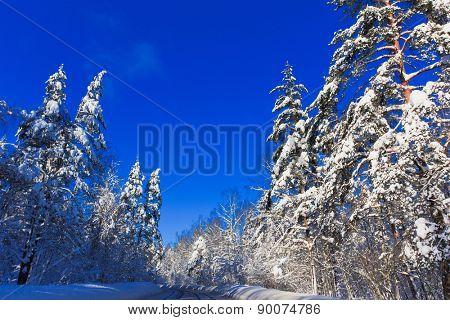 Jolly Sunny Winter